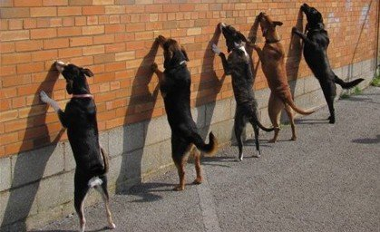 """Up Against The Wall!"" Courtesy of ""Manners for Mutts."" Kentucky Inmates teach their dogs to perform a trick."