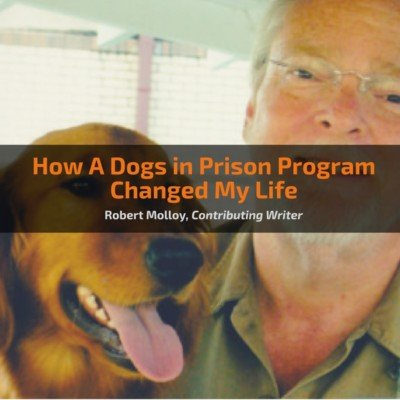how-a-dogs-in-prison-program-changed-my-life
