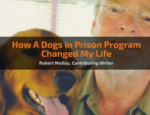 How A Dogs in Prison Program Changed My Life